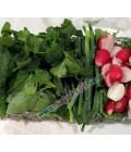سبزی خوردن با ریحان نیم کیلویی تازه